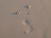 Dog prints and footprint