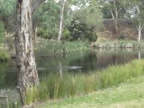 Lake at Wittunga