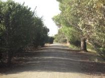 Reisling trail one way