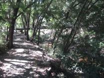 Path looking back to the footbridge