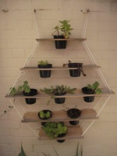 Matt downstairs has created this little potted display