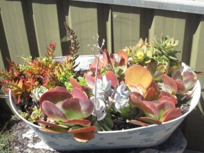 A tub of plants from up the street - they look great I think