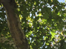 Branch and leaves