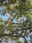 Branches, leaves and sky