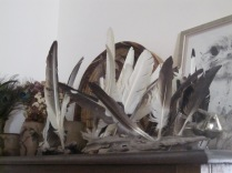 Black and white feathers at Pam's
