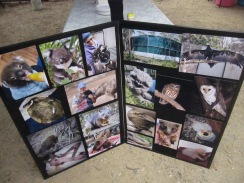 The photo board with some pics of the creatures who have been cared for at MF