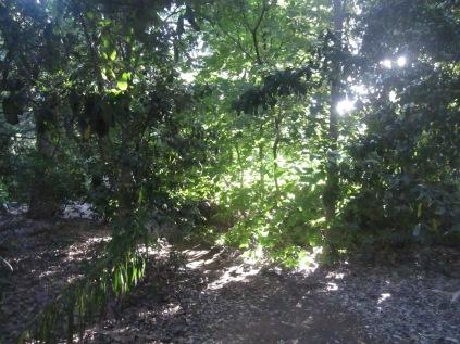 Botanic gardens and glitter of sun