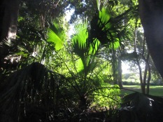 Light through palm leaves at the Garden