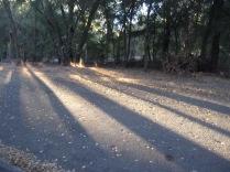 Long shadows, Auburn