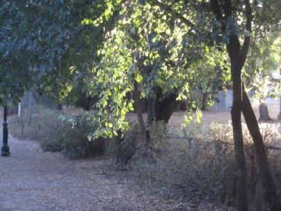 Light through the leaves, Auburn