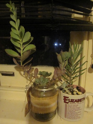 Succulents going wild in the kitchen window - given to me by another Megan and Deirdre (in the Elizabeth mug)