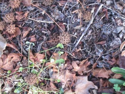 and other baubles on the ground with leaf litter