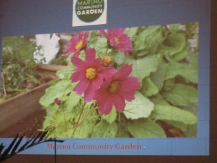 Pics from slideshow of the garden