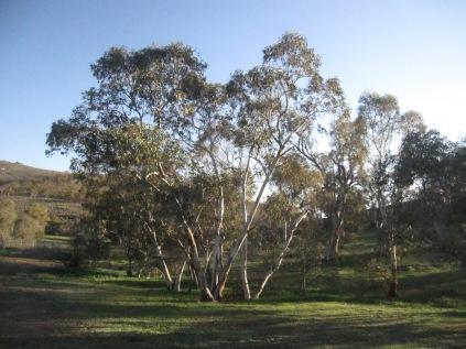 Trees near the house