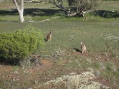 2 kangas