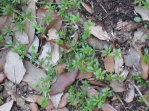 close up of grass and weeds growing