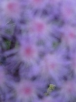 Even this out of focus one is lovely