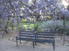 Seat in wisteria arbour