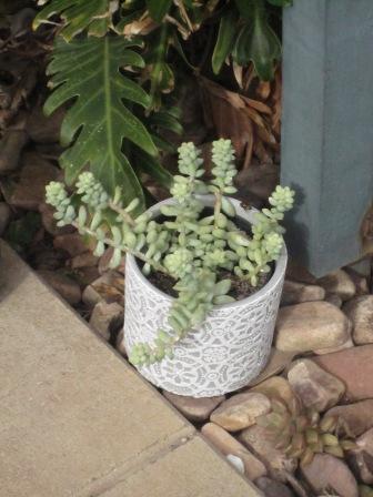 Succulent in funky pot
