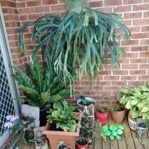Pam's joeys garden 2
