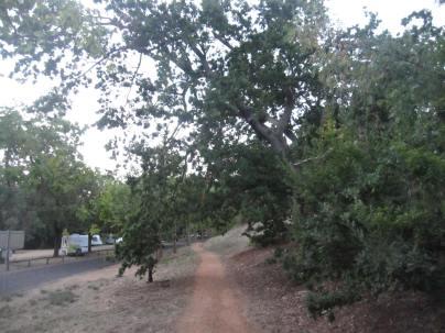 Walking path one way