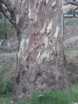 Close up of trunk of tree