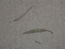 Leaf and image