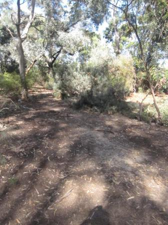 In the mallee section of the garden, dappled light on the path