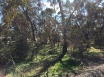 Trees, Penwortham