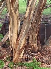 gorgeous tree trunk...