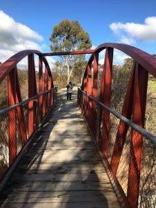 Bridge (and Maxine)