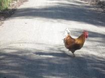 Walking companion