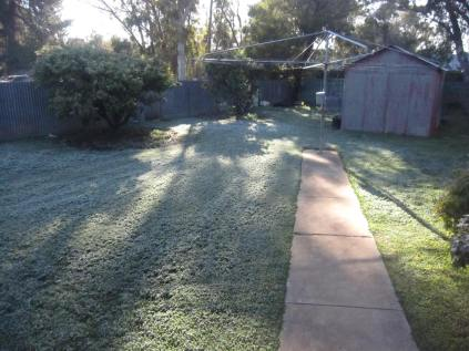 Early morning light, thick frost