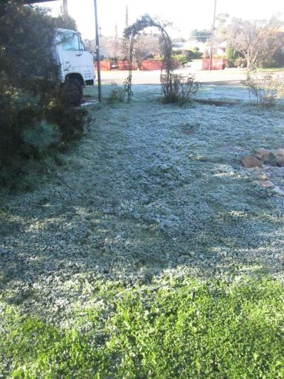 Thick frost in the front garden