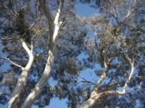 Blue sky through the tree