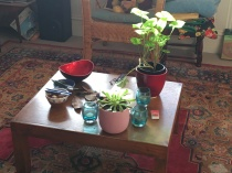 Light on the table (and especially on the syngonium)